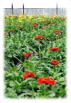 Anwendungen bei der Pflanzenzucht